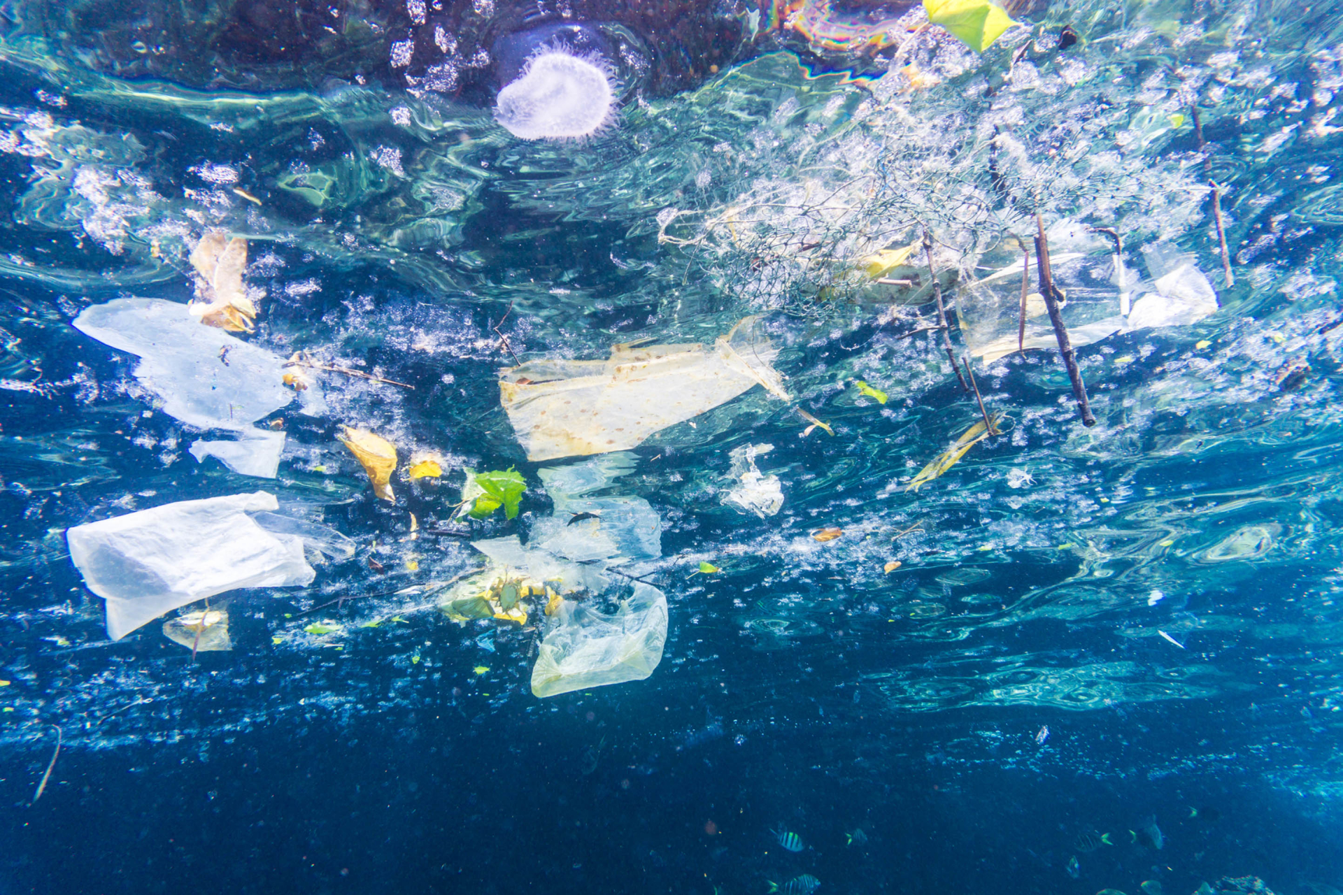 The Truth About Plastic Pollution