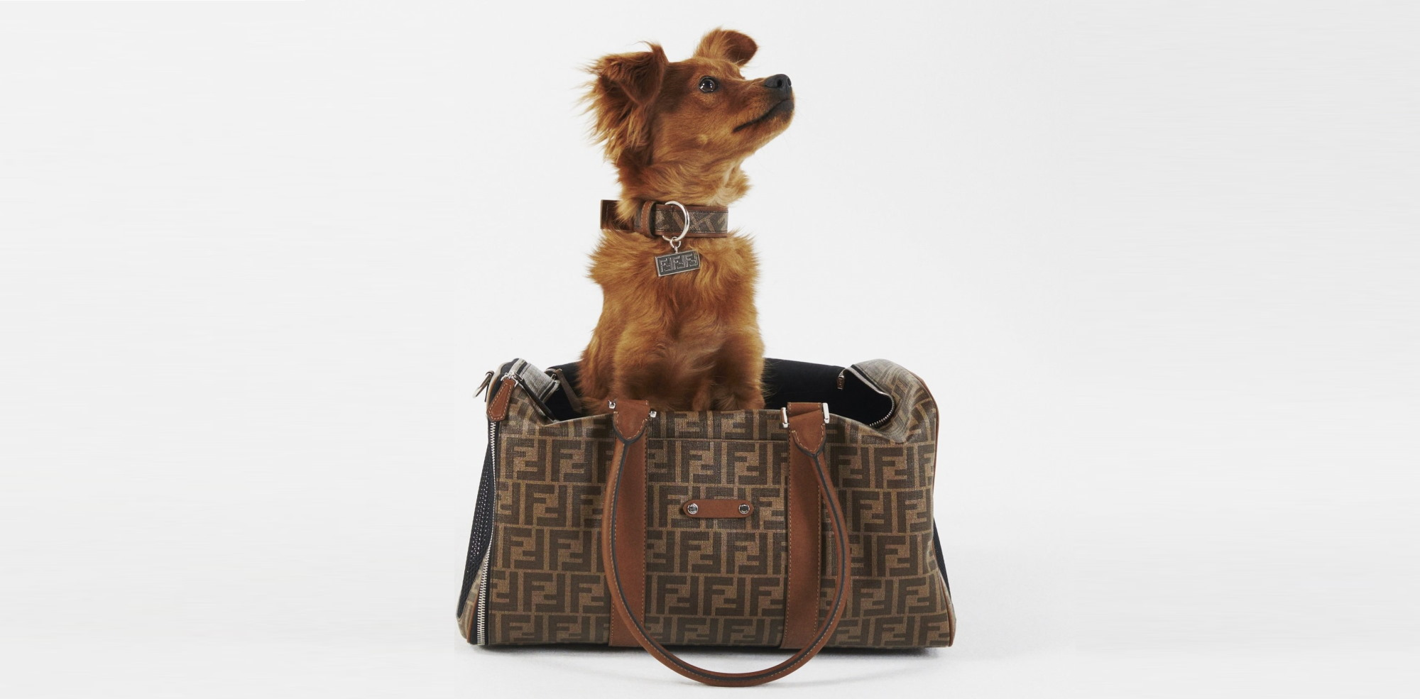 Fendi Has Launched A Pet Accessories Line, Because Your Pup Deserves Only The Best