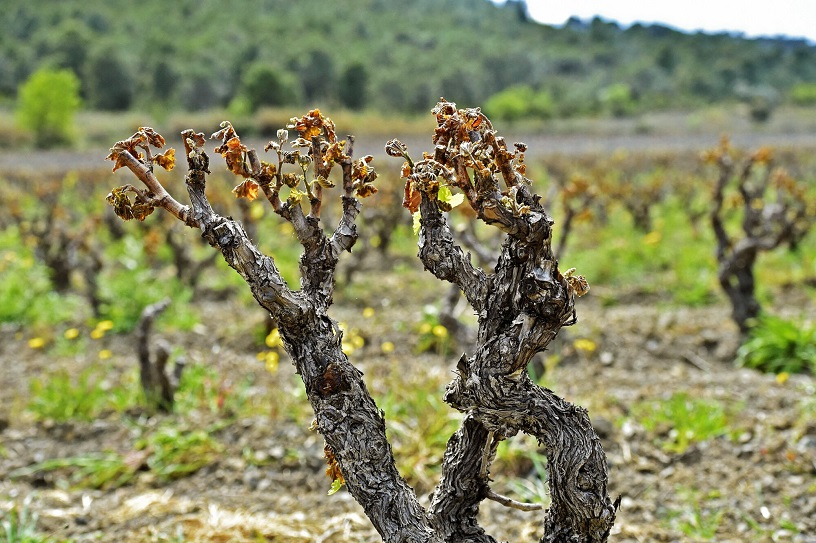 French Wine Production