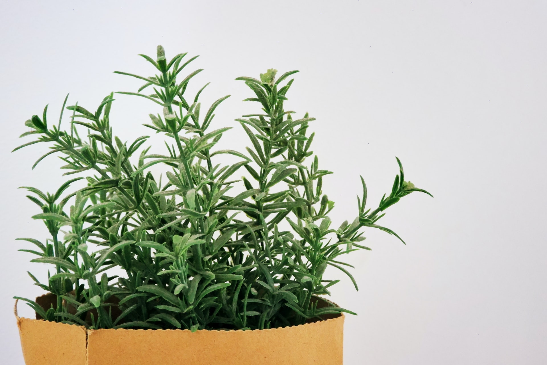 Rosemary - edible plants to grow